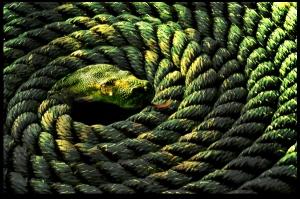 rope-snake
